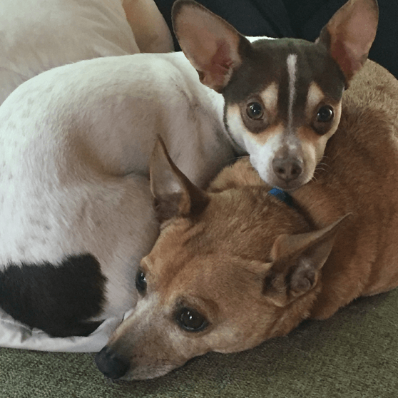 Buddy Love and Jaxx